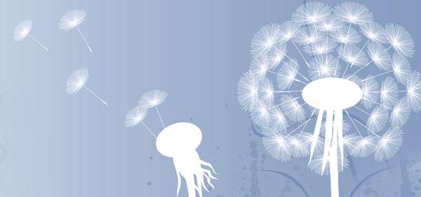 dandelion clock flower head blowing in the wind